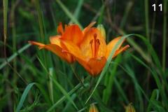 Concorso-Arancione-11