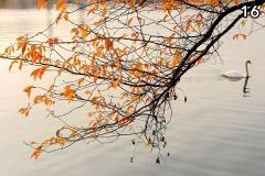 Concorso-Arancione-16