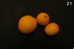 Concorso-Arancione-21