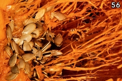 Concorso-Arancione-56