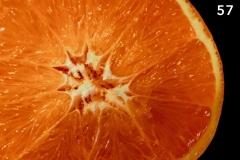 Concorso-Arancione-57