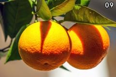 Concorso-Arancione-9